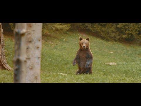 Bagossy Brothers Company feat. Gabi a medvebocs - Visszajövök (akusztik)