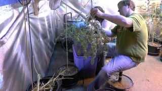 Trim It, Dry It, Smoke It, Cannabis Medicine