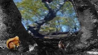 Squirrel compDefinit convertito mov