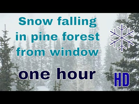 (HD) Snow falling in pine forest from window