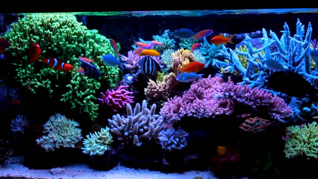 Krzysztof Tryc S Reef Tank System With Np Reducing
