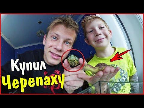 ВЛОГ ♦ Богдан купил черепаху