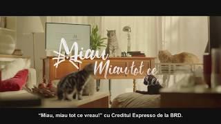 Creditul Expresso - Pisiconomie