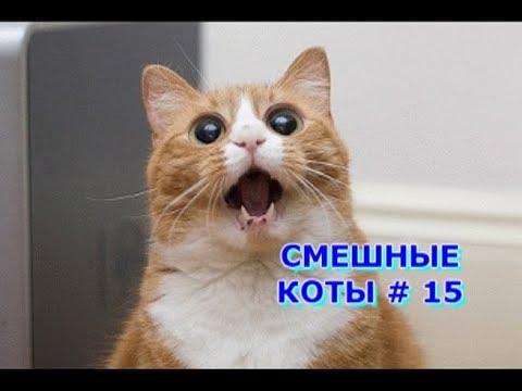 Приколы с кошками и котами #15. Подборка смешных и интересных видео с котиками и кошечками 2017