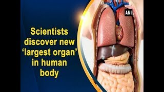 Scientists discover new 'largest organ' in human body - Health News