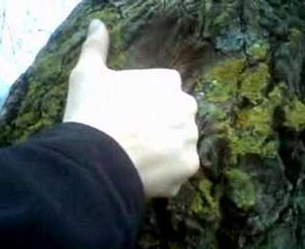 vigina Tree?! Video