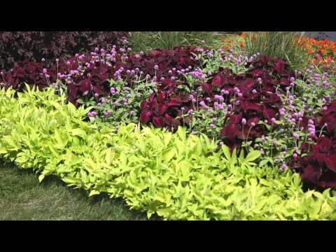 Garden Landscape - How to Design a Garden