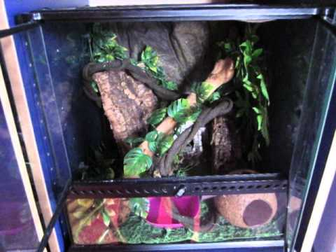 Reptile Room Tour 2013