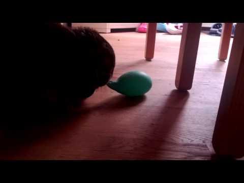 Rabbit crush thumbnail