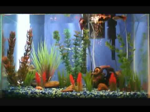 10 gallon fish tank maintenance community 2017 fish tank for 10 gallon fish tank stocking ideas