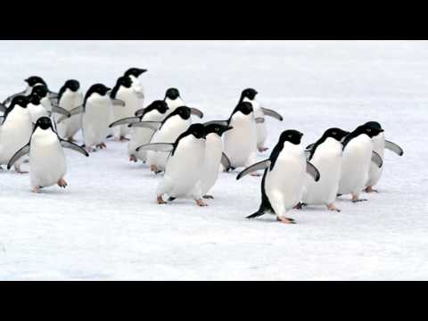 Penguins, People And Prostitution