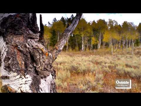 Motion - Yellowstone National Park