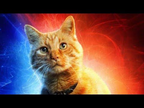 주목! 캡틴마블 고양이 소개 (어벤져스4 등장 가능성 90%)