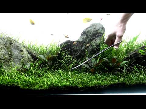 trimming my Planted aquarium