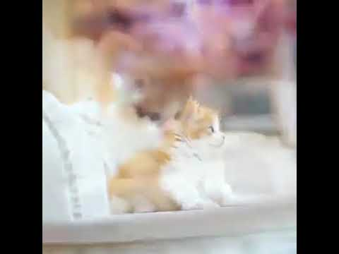 FUNNY! Cutest Chinese cats ever! 🐱 + song for children