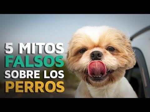 5 Mitos FALSOS sobre los perros