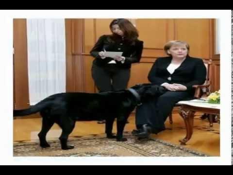 funny Vladimir Putin & Angela Merkel