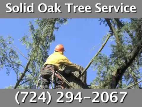 Solid Oak Tree Service, Sarver, PA