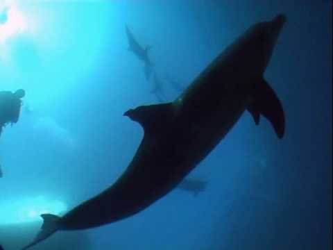 scuba diving with 15 dolphins in Hurghada Egypt