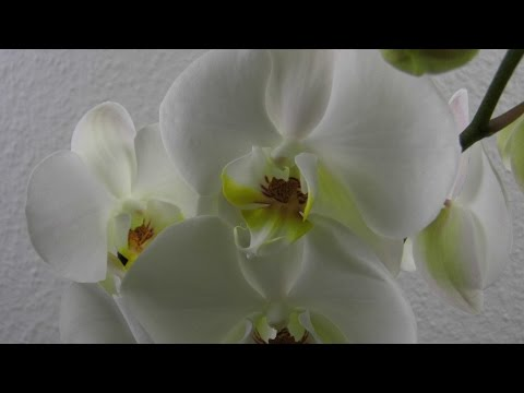 Orchideen im Glas ❁ Deko Ideen mit Flora-Shop