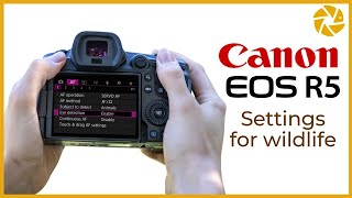 Canon R5 Settings For Wildlife Photography