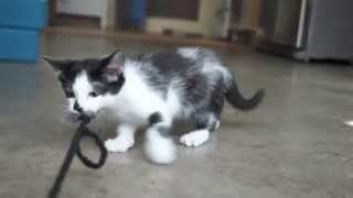 Komik Kedi Video 1 ( funny cat videos )