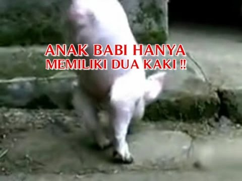 VIDEO ANEH TAPI NYATA
