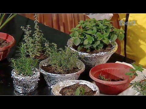 طريقة زراعة الروزماري  والريحان والزعتر بالمنزل #مطبخ_الراعي #فوود thumbnail