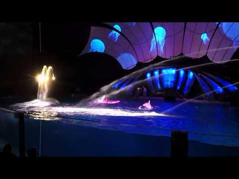 Georgia Aquarium Dolphin tales