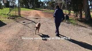 Riebeeck man is charged by SPCA for beating his dog
