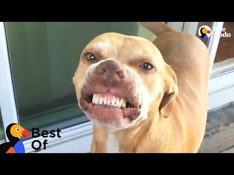 Funny Dogs and Cats With Signature Moves  | The Dodo Best Of