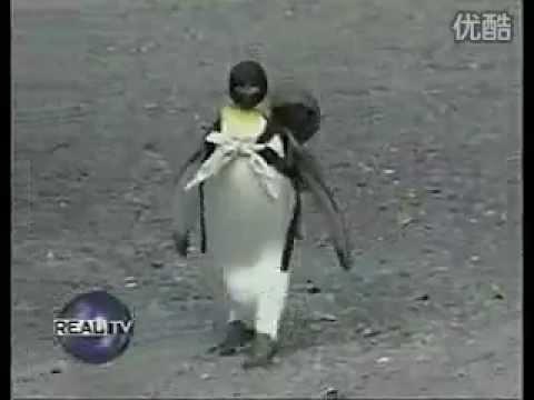 pinguino mascota