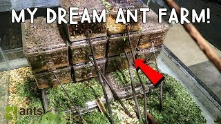 My Dream Ant Farm: Leafcutter Ants