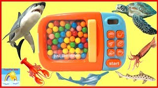 Learn sea animals names for children | learn colors with Bubblegum |TOYS FOR KIDS