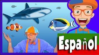 En el Acuario con Blippi Español | Peces para Niños y Infantil