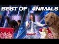 download lagu      Singing Dogs! Cat Tricks! Animal Noises From A Human! - America's Got Talent 2018    gratis