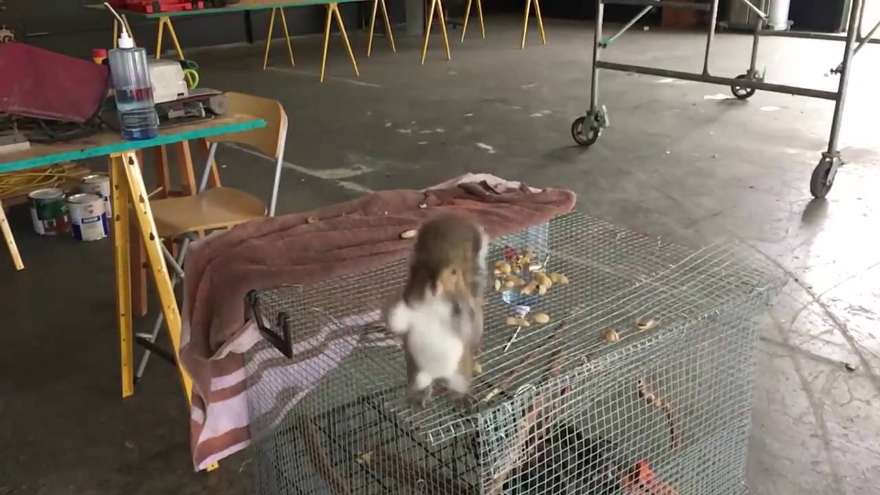 [Homeless Squirrels Take Up Residence On Kid's Shirt] Video
