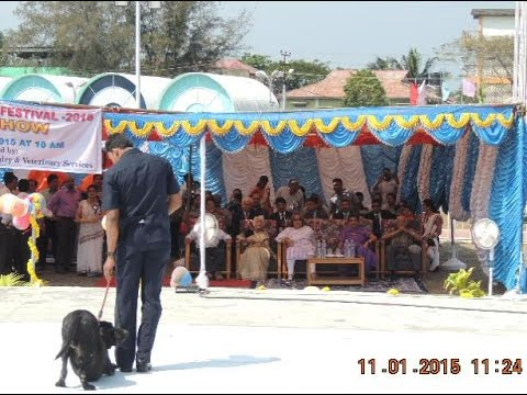 SlideShowSmt. Salma AnsariJi, Inagurated DOG-SHOW-@-ITF-edweepNews(iNDiA)