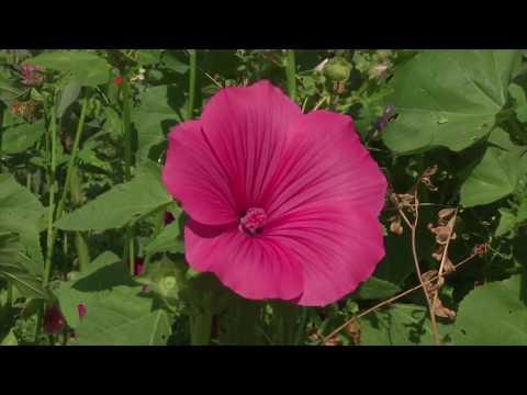 Essbare Blüten - Genuss aus dem Garten
