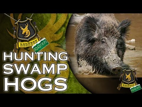 Hunting Swamp Hogs with a knife!