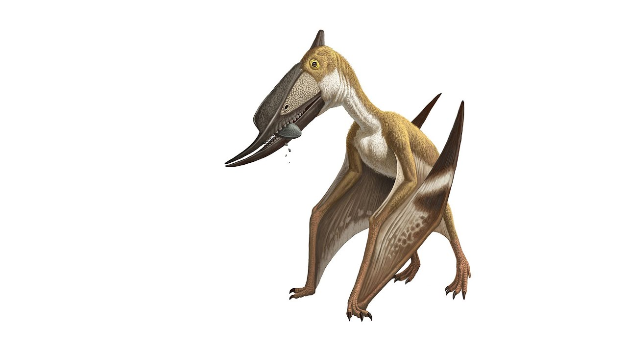 Pterosaur  Ancient Too...
