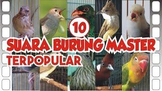 Download Lagu TOP #10 Suara Burung Master *TERPOPULAR* Gratis STAFABAND