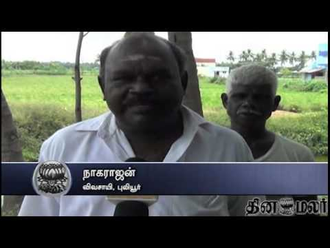 Continuous Rain Spoil Agriculture in Trichy - Dinamalar May 16th News