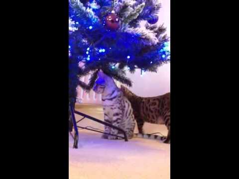 Neptune & Zeus explore the Christmas tree