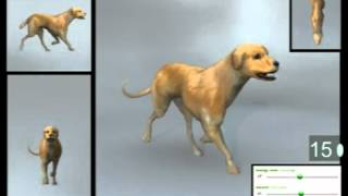 Animation Reference Library  Mixamo 3D Dogs Motion