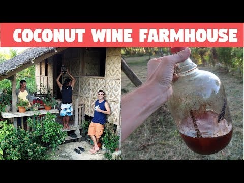 DRINKING COCONUT WINE AT A FILIPINO FARMHOUSE - Kulas and the Titas