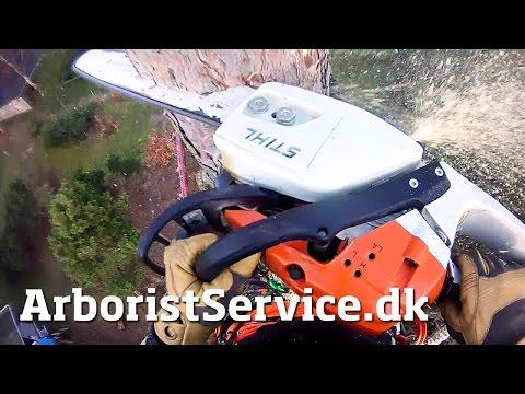 Tree removal - tree topping - tree climbing arborist - topkapning odense - topkapning fyn