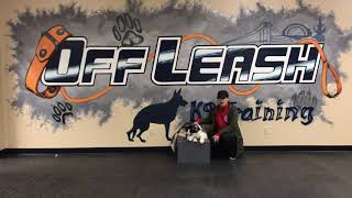Skye the Husky Owner's Testimonial After Board and Train at Cincinnati Dog Trainers Off Leash K9