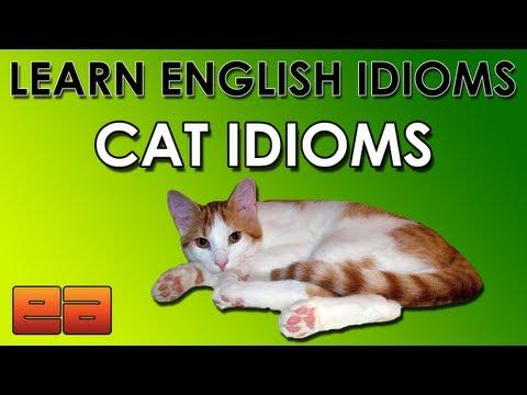 Cat Idioms – Learn English Idioms – Animal Idioms – 4 – EnglishAnyone.com