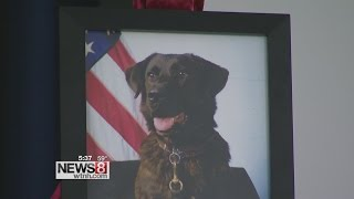 Military dog given hero